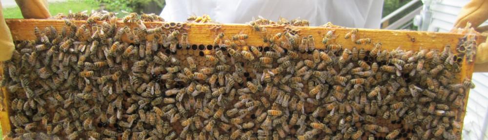 Dartmouth Beekeeping Association