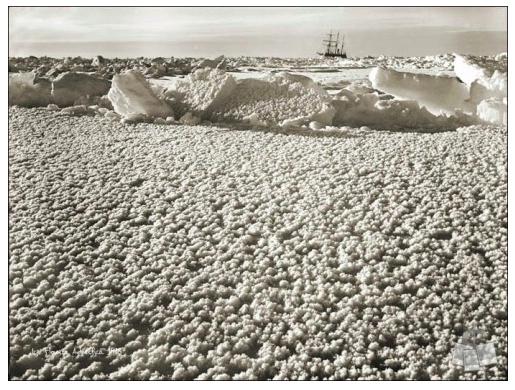 """""""Ice Flowers"""" - courtesy of Shackleton Endurance Photography"""