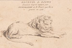 engraving of a lion by Bernard Picart