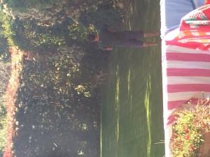 Fanis stalks a deer in Cat's backyard!