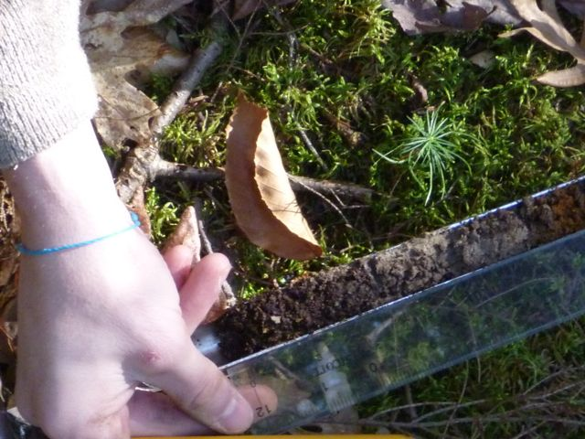 soil core