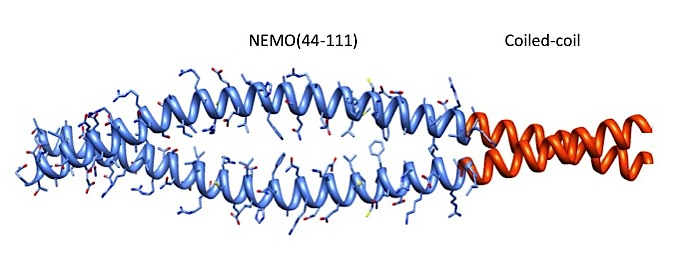 "Biochemistry. 2014: ""Protein Engineering of the N-terminus of NEMO: structure stabilization and rescue of IKKβ binding"""