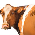 cow-brand