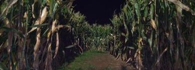 This Corn Maze Has Been Fun But It's Starting to Get Dark Out