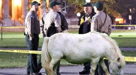 Sustainability Win! Safety & Security to Replace SUVs with Ponies