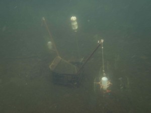 Recruitment trap deployed in Lake Sunapee, July 2014