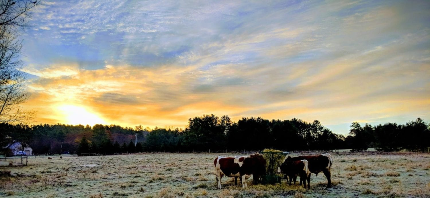 Cows, Land, and Labor