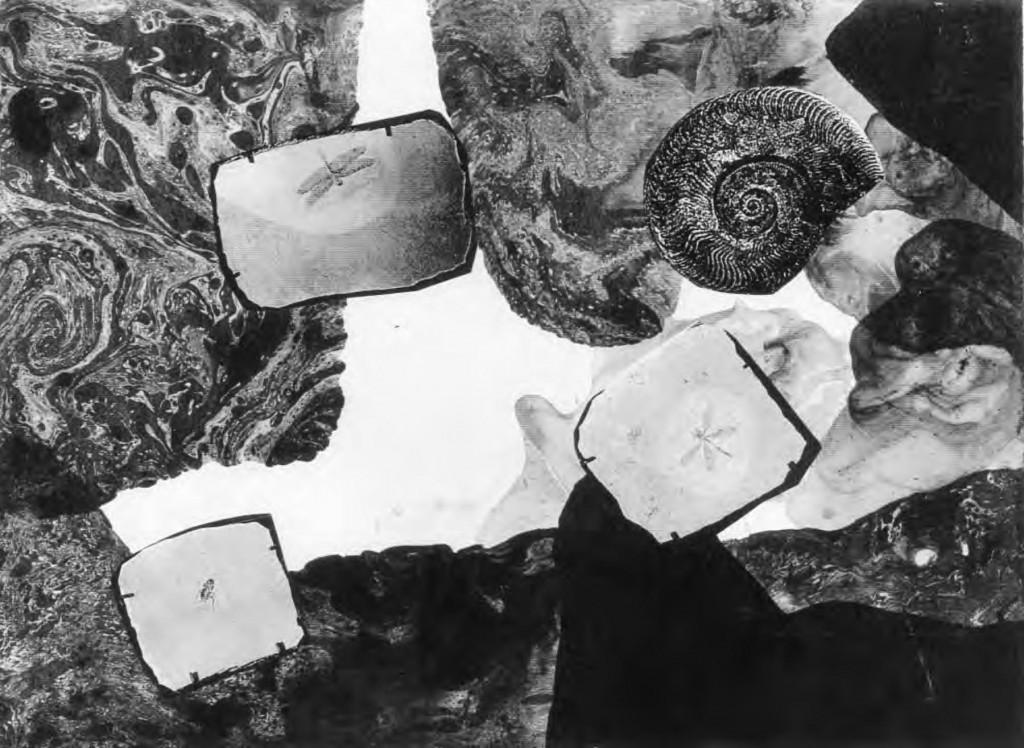 Fox and Mines Ammonite | 狐と炭鉱;アンモナイト (2000)