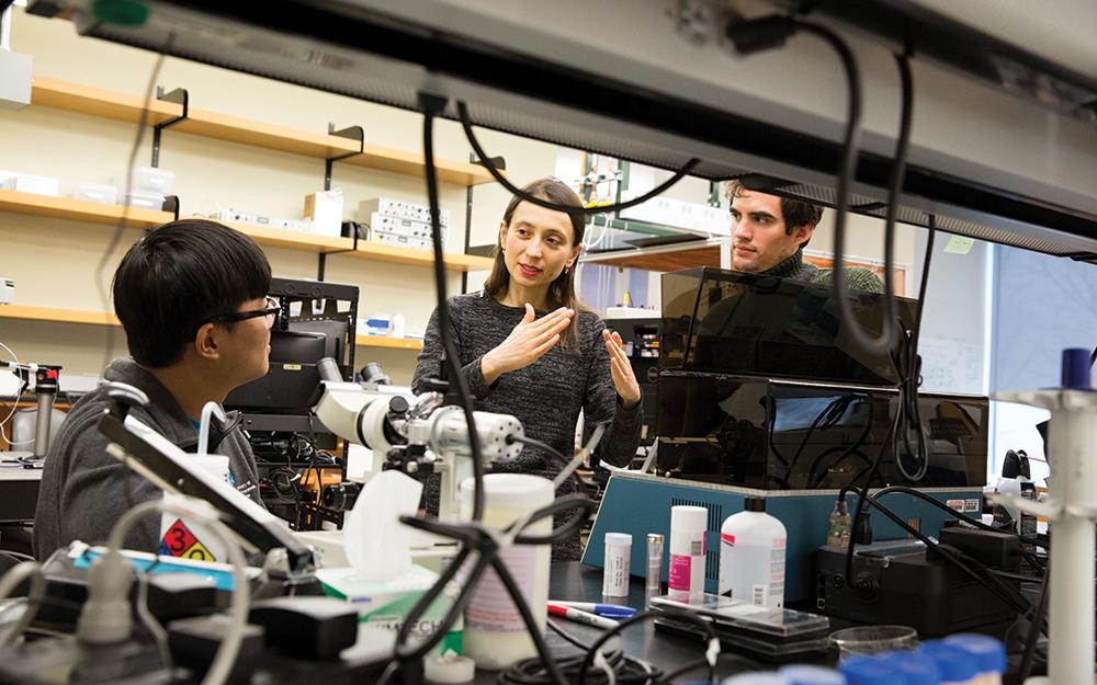 Lasers, Chemical Compounds Bring Kozorovitskiy Inside The Brain
