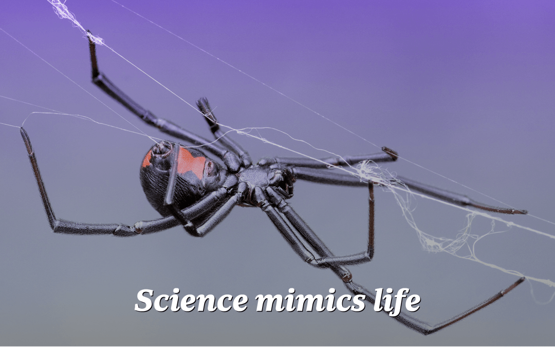 Mystery of black widow spiders' steel-strength silk webs could lead to equally strong synthetic materials