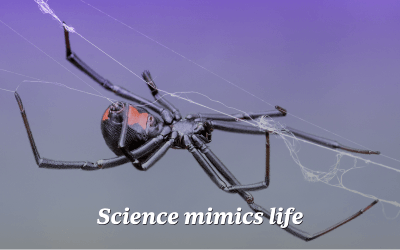 Spiders' steel-strength silk webs could lead to equally strong synthetic materials