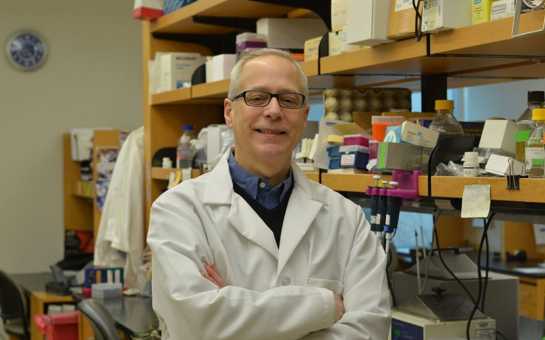 In the Immune System's Trenches, a New Discovery