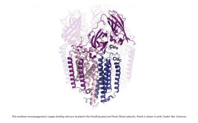 Methods pinpoint copper binding sites in enzyme from methane-munching bacteria