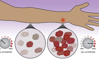 Immune cells consult with neighbors to make decisions