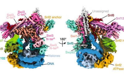 Structure revealed of key chromatin-remodeling complex
