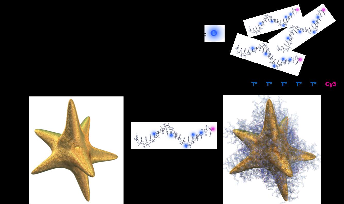 DNA-Au Nanostars
