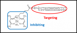 By attaching the DNA binding sequence of a particular transcription factor, highly specific protein targeting is achieved.