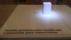 A genetically modified soybean on display in the Natural Science Museum in Rosario