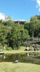 Curitiba University of the Environment - This was the first university in the world to be founded exclusively for environmental study. Its main structure is a multi-level treehouse with classrooms, a spiraling walkway, and a beautiful lake in the backyard. The goose started  chasing me immediately after I took the picture