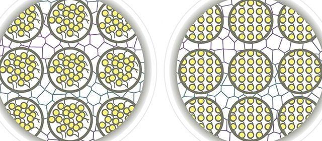 Disorderly chromatin compared to orderly chromatin