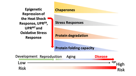 Organismal proteostasis in aging and neurodegenerative diseases.