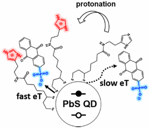 Reversible Modulation of the Electrostatic Potential of a Colloidal Quantum Dot through the Protonation Equilibrium of its Ligands