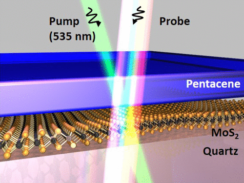 Ultrafast exciton dissociation and long-lived charge separation in a photovoltaic pentacene-MoS2 van der Waals heterojunction