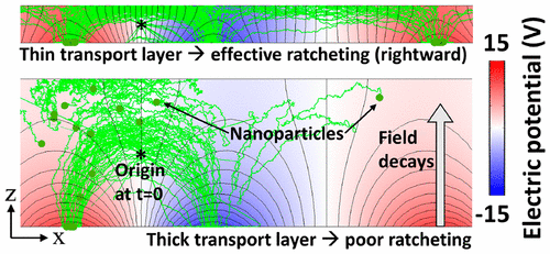 Mechanisms of Symmetry Breaking in a Multidimensional Flashing Particle Ratchet