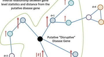 GeneSurrounder: network-based identification of disease genes in expression data