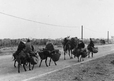 Camel convoy on a road in Algeria