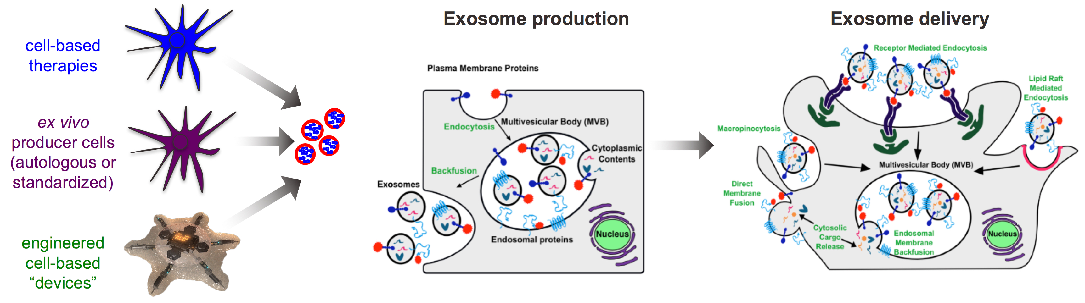 ExosomesV2
