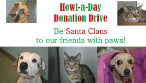 Howl-a-Day donation drive