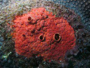 Marine Sponge