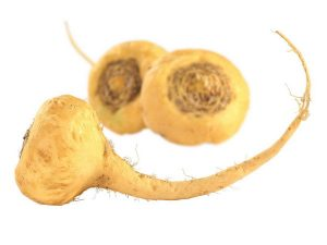 maca research
