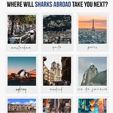 NSU's Sharks Abroad Fair