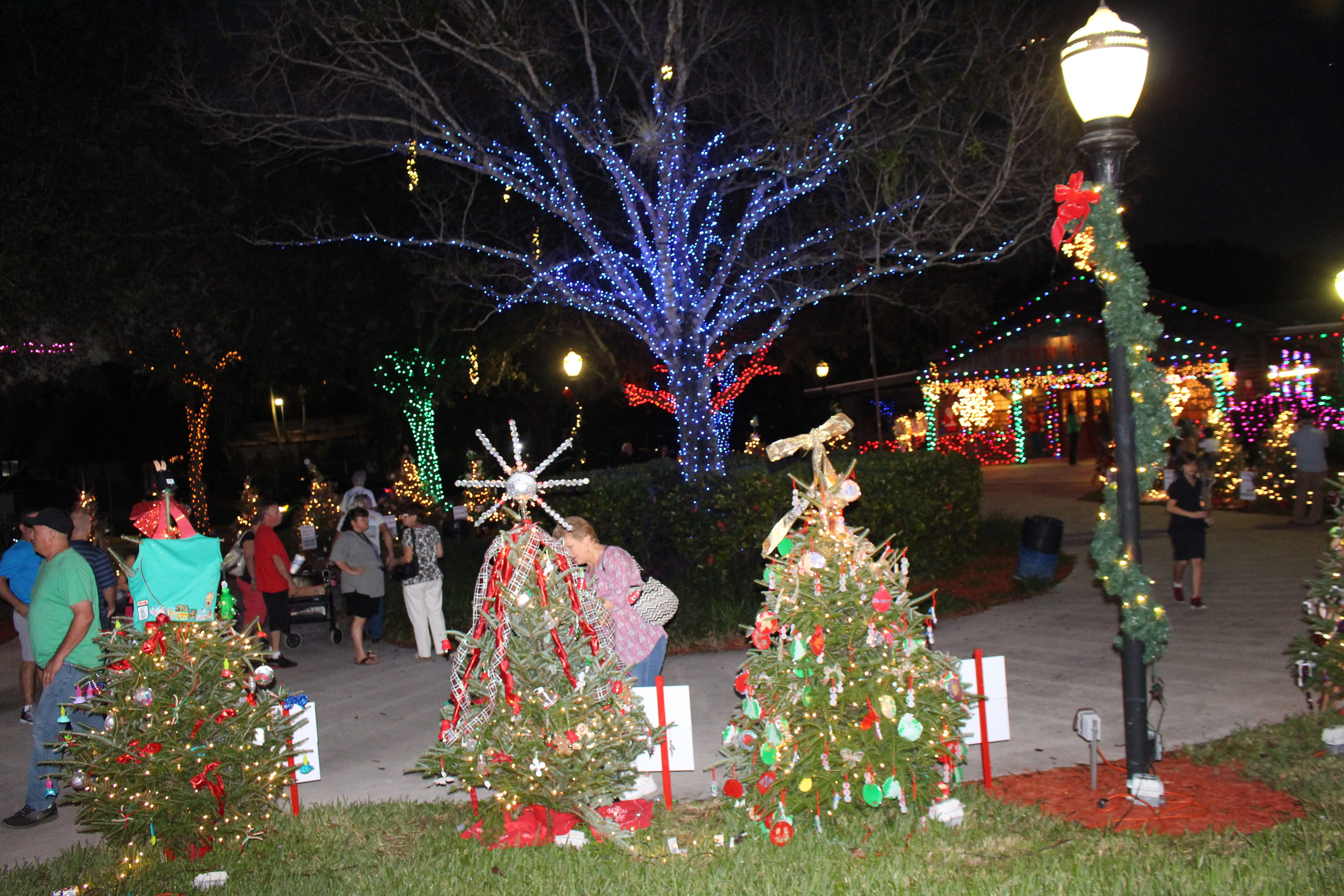 Davie lights up for the holidays   The Current
