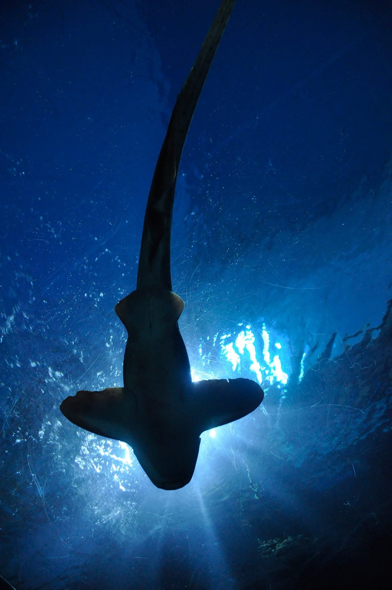 Shark Speak Can You Tell Me About Your Experience With