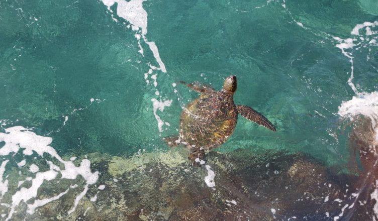 Aboriginal Art Authentic - Sea Turtles iPhone 11 case