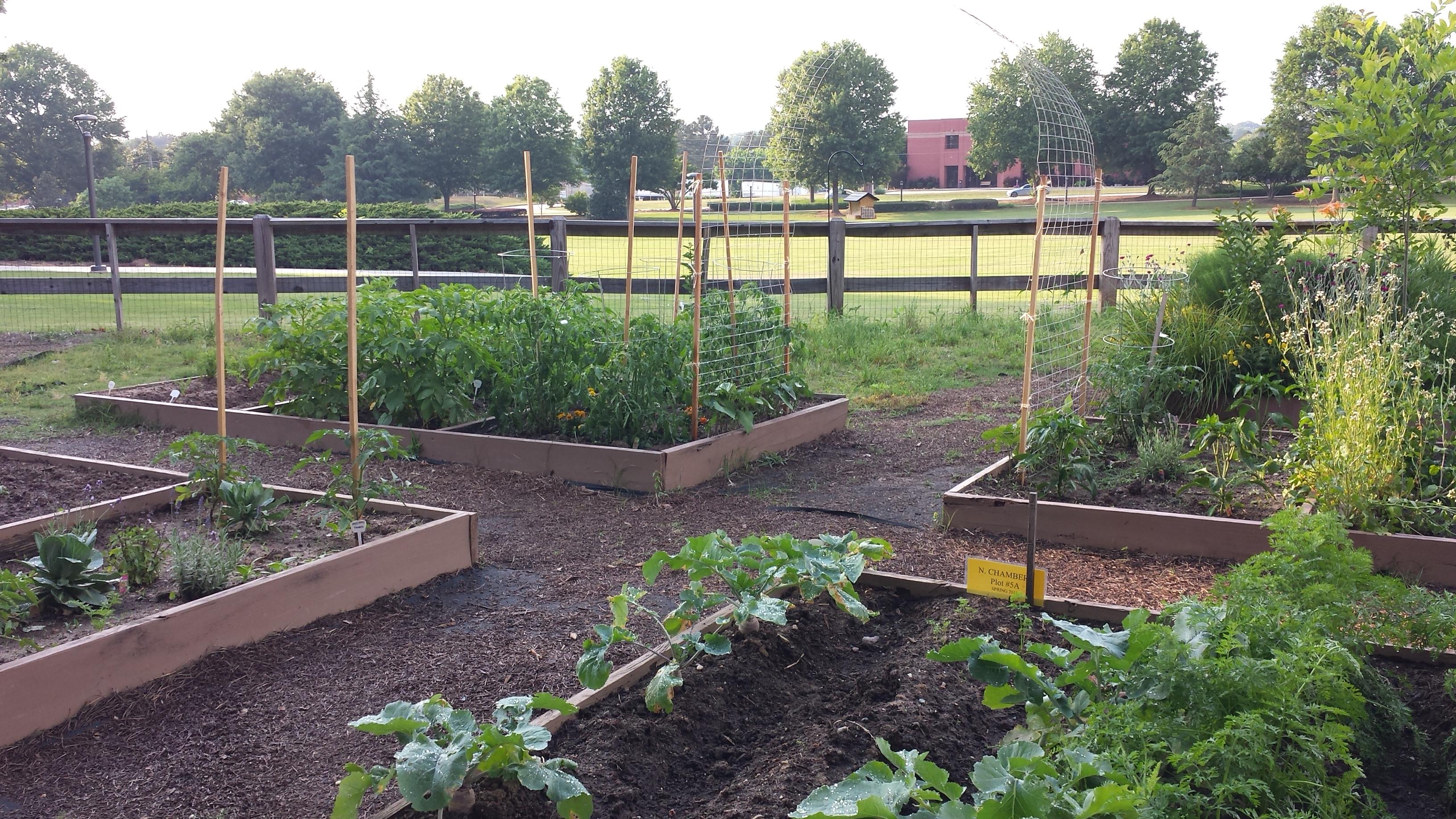 Garden Update Susannah Lomant