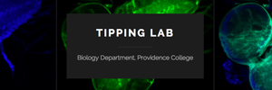 Image for Tipping Lab