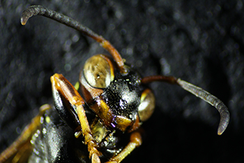 Close up of insect
