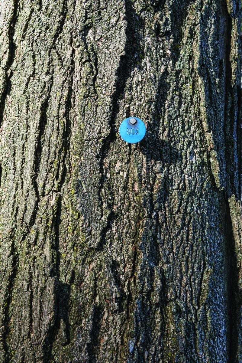 A blue tag indicates a tree's place in the campus tree inventory.