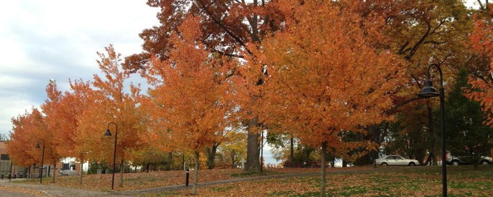 Fall Trees Banner