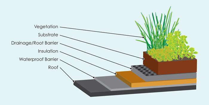 green_roof_diagram