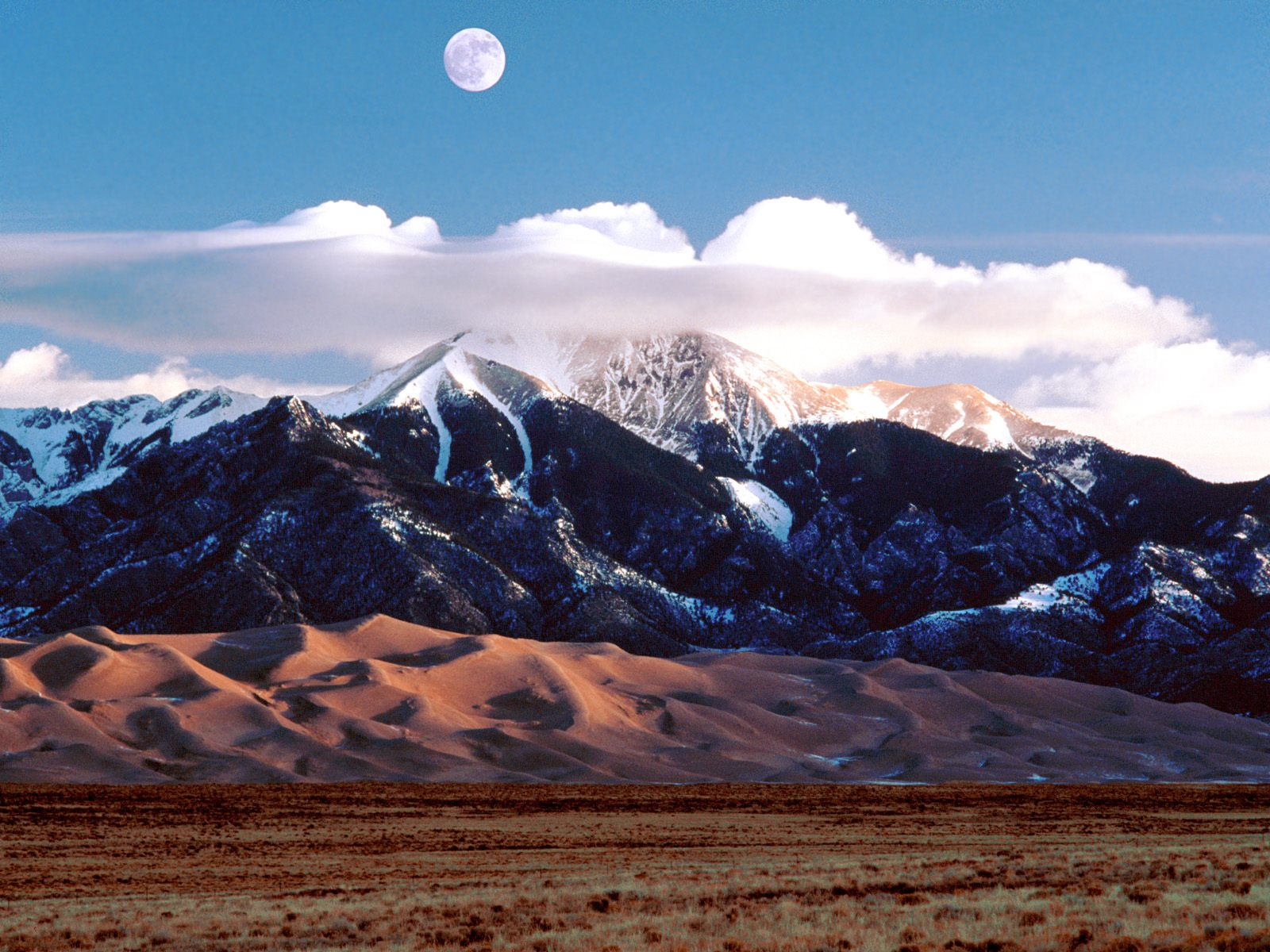 Great Sand Dunes National Park | Insects and Arachnids |Great Sand Dunes