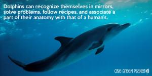 CetaceanPhotoFact_3