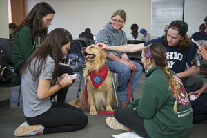 Bullet, a 3-year-old golden retriever who serves a therapy dog, receives attention from all directions during a stress relief break in the Friends Room on the third floor of the Vernon R. Alden Library on Tuesday, April 27, 2015. (Tyler Stabile/Ohio University Libraries)