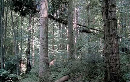 forest 1.jpg