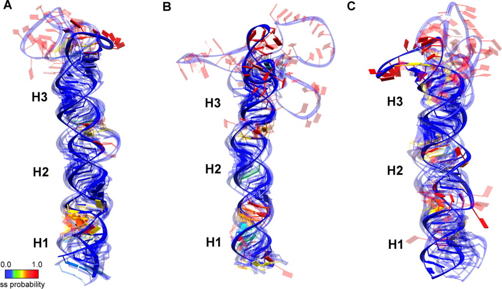 micro RNA ensemble structure using SHAPE