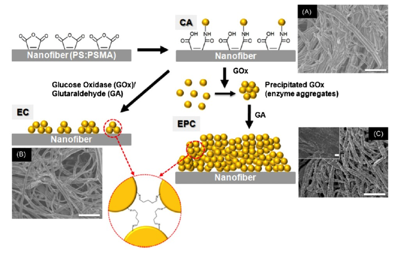 biocatalytic fibers